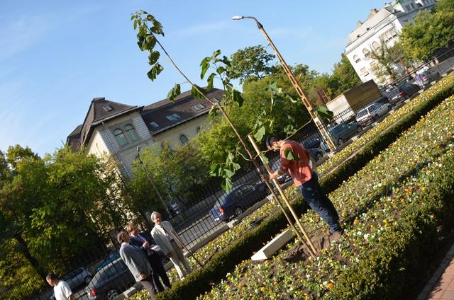 Elültették a wittenbergi fa párját a Reformációi Emlékparkban