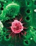 Bővítené az őssejt-kutatások lehetőségeit az SZDSZ
