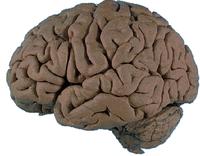 Mesterséges agyak: helyettünk döntenek?