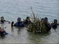Karácsonyfaállítás a tóban