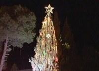 Nézze meg a betlehemi karácsonyfát!