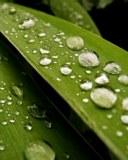 Világvallások környezetvédelmi akciótervet mutattak be