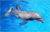 Állatvilág: szuper intelligens delfinek, gyilkos orkák és monogám békák