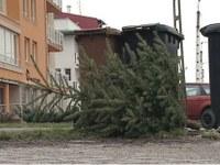 """Egy karácsonyfa emlékére – """"Ó szép fenyő, oly' kedves minden ágad!"""""""