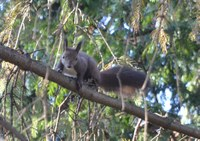 Mókuska, mókuska, felmászott a fára...