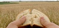 Reményik Sándor: Mindennapi kenyér