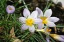 Fabiny Tamás: Virágvasárnapra